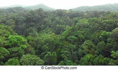 Aerial view of rain-forest jungle - Aerial view of rain-...