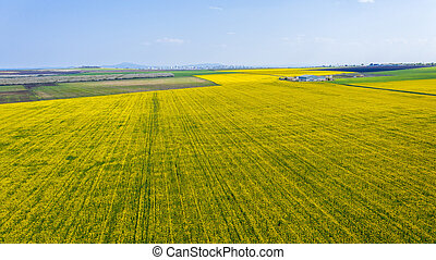 Aerial view of rapeseed field.