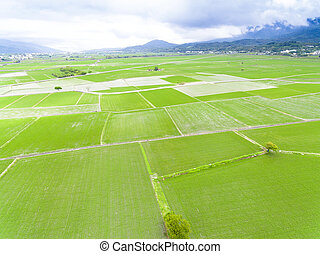 aerial view of rice field in Taiwan at spring