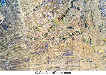 aerial view of rice fields after harvest