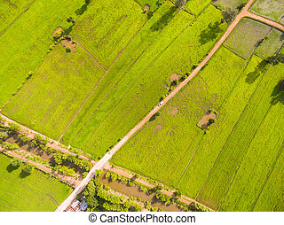 Aerial view of rice fields