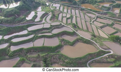 Aerial view of rice terraces of japan (Yamaguchi Prefecture)