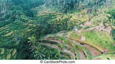 Aerial view of rice terraces on the island of Bali
