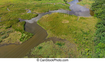 Aerial view of river and forest, Texture background of river and forest.