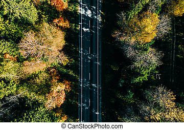 Aerial view of road in autumn forest.
