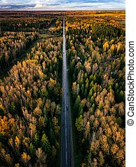 Aerial view of road in autumn forest. Fall landscape with road, red and yellow trees.