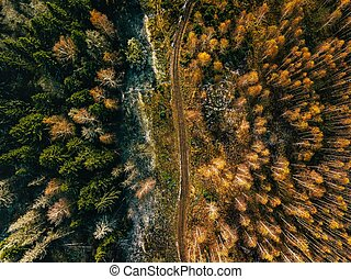 Aerial view of road in autumn forest. Fall landscape with rural road, red, yellow  trees with frost.