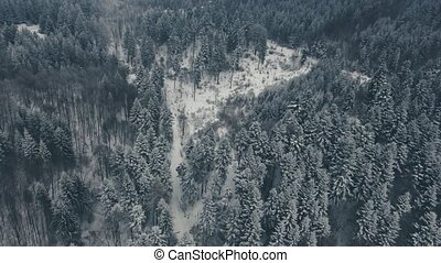Aerial view of road in coniferous forest in winter.