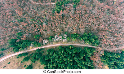 Aerial view of road through forest.