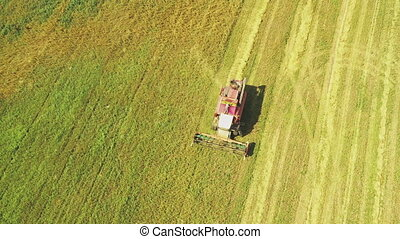 Aerial View Of Rural Landscape. Combine Harvester Working In Field, Collects Seeds. Harvesting Of Wheat In Autumn. Agricultural Machine Collecting Golden Ripe. Bird's-eye Drone View