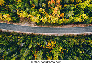 Aerial view of rural road in yellow and orange autumn forest