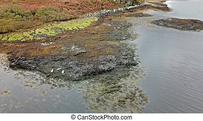 Aerial view of seal colony in Scotland - UK - Aerial view of...