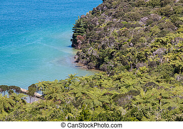aerial view of silver fern forest on New Zealand coastline
