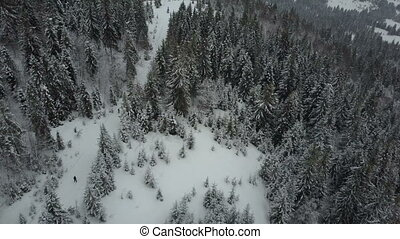 Aerial view of skiers moving through a forest among pine...