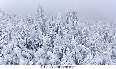 Aerial view of snow covered forest covered with mist.