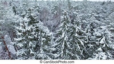 aerial view of snowy forest at winter