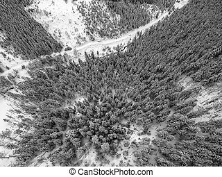 Aerial view of snowy trees in the mountains
