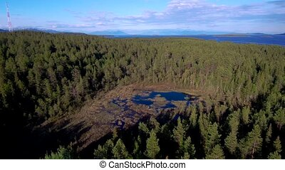Aerial view of spruce forest and swamp in spring time. Taiga...