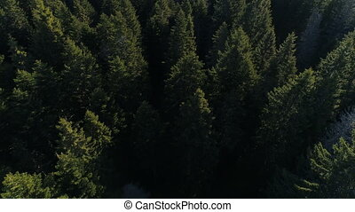 Aerial view of spruce forest in Montenegro