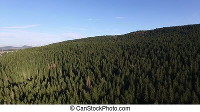 Aerial view of spruce forest near Black lake in Montenegro -...
