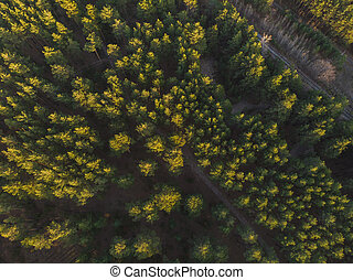 Aerial view of summer forest.