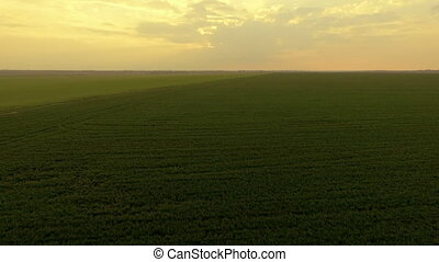 Aerial view of sunset on a background of green fields and horizon