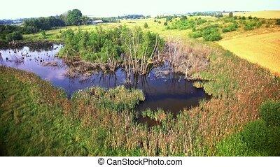 aerial view of swamp
