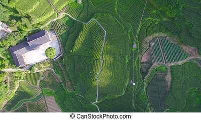 Aerial view of tea plantations and village, Hubei, China.
