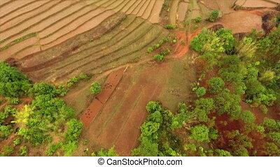 Aerial view of terraced farmlands, Kalaw, Myanmar - Wide...