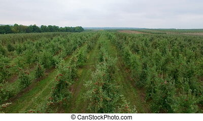 Aerial view of the apple orchard