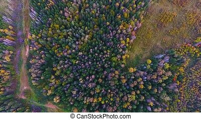 Aerial view of the autumn forest in the Kaluga region. Russia