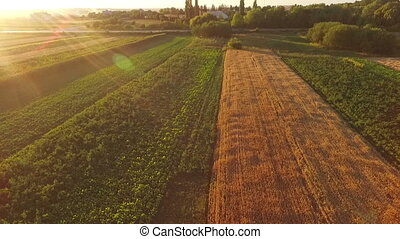 Aerial view of the beautiful fields of wheat