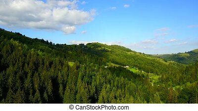 Aerial view of the Carpathian forest, Ukraine. Drone flight