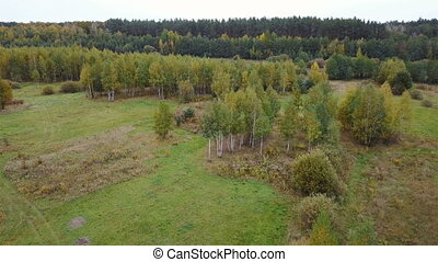 Aerial view of the field with trees covered with yellow...
