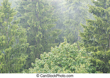 Aerial view of the forest at rainy summer day.