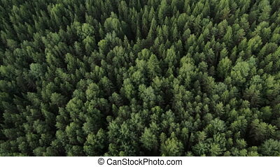 Aerial view of the forest