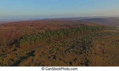Aerial view of the forest. Carpathian Ukraine
