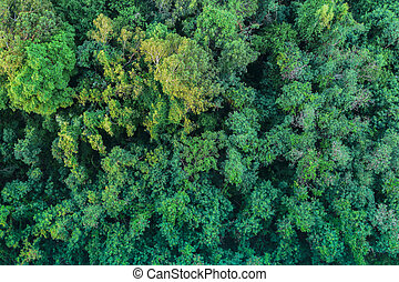 Aerial View Of The Forest tree that in depend on wilderness areas in the city park