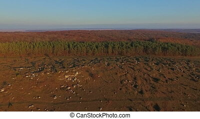Aerial view of the forest. Ukraine Carpathians