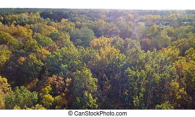 Aerial view of the forest with trees covered with yellow foliage and road