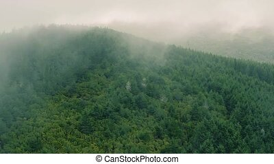 Aerial View of the Mountain Evergreen Forest with Fog