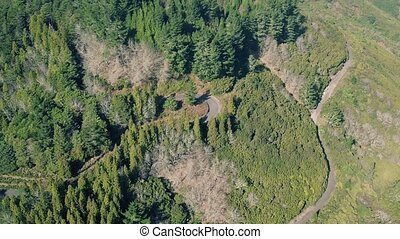 Aerial View of the Mountain Evergreen Forest with Road