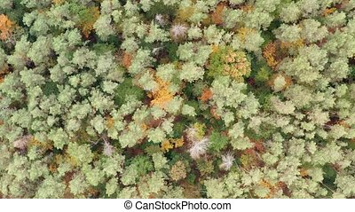 Aerial view of the multi-colored forest in autumn day.
