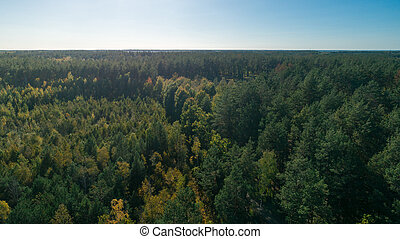 Aerial view of the pine forest
