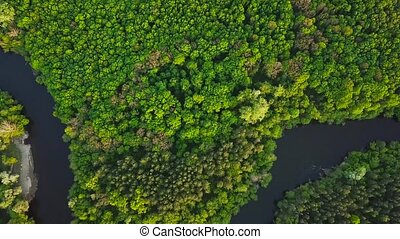 Aerial view of the river Sejm and mixed forest - Top view of...
