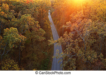 Aerial view of the road in the autumn forest at sunset