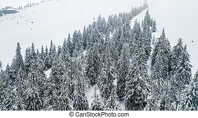 Aerial view of the snow-covered Christmas tree in mountains