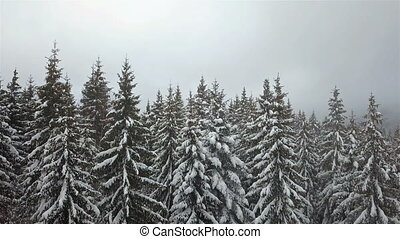 Aerial view of the snow-covered pine tree