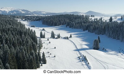 aerial view of the snow-covered spruce forest on a sunny day