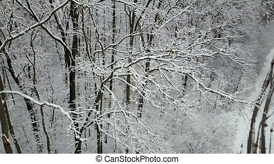 Aerial view of the snow-covered trees branches